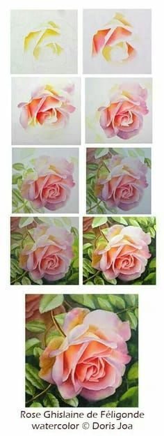 By doris joa, watercolor painting demo rose pink. More