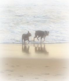 Phantom Dogs of Pawley's Island, South Carolina   On the shores of Pawley's Island, there is a legend of a haunting at the Pelican Inn that is not your usual ghost story.  This one involves a pair of ghostly dogs that roam the beaches.  Read the full story>>