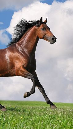 """Search Results for """"chestnut arabian horse wallpaper"""" – Adorable Wallpapers Tier Wallpaper, Horse Wallpaper, Wallpaper Pictures, Animal Wallpaper, Custom Wallpaper, Wallpaper Gallery, Photo Wallpaper, Nature Wallpaper, Mobile Wallpaper"""