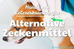 Welche #Zeckenmittel soll oder darf man eigentlich einem #Hund mit #Lebertumor geben? Ich habe mich etwas damit beschäftigt und eine gute Lösung für meine leberkranke Hündin gefunden https://www.seniorpfoten.de/alternative-zeckenmittel-hund-lebererkrankung/