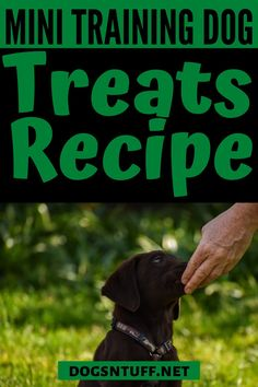 All fur parents want the best for their pooch. So, why not make your own DIY Dog Training Mini Treats? It is a quick and easy recipe, plus you can control the sizes and ingredients based on your dog's need. #DIYDogTreats #DogTreats #NoBake #DogTreatsHomeMade Diy Dog Treats, Homemade Dog Treats, Small Dog Breeds, Small Dogs, Can Dogs Eat Bananas, Dog Facts, How To Make Diy, Dog Recipes, Dog Quotes