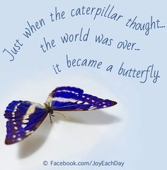 Butterfly quote via www.facebook.com/joyeachday