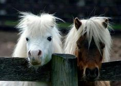 Thelwell Ponies!