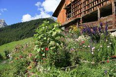 L'orto domestico del Sudtirolo è un piccolo ma importante tassello del complesso mondo contadino, ricco di tradizioni e pratiche nate in stretta connessione con la natura.