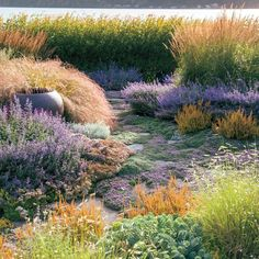 How to Design a Waterfront Garden is part of garden Inspiration Landscaping - How a garden designer created a breezy, beachy oasis by letting nature do its thing Landscape Design Plans, Garden Design Plans, House Landscape, Beach Landscape, Coastal Gardens, Beach Gardens, Small Gardens, Outdoor Gardens, Modern Gardens