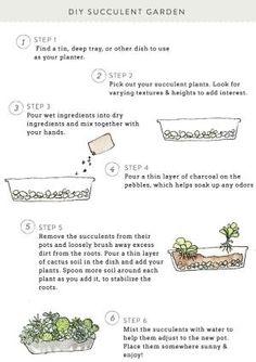 DIY succulent garden by marjorie