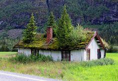 esse telhado verde já virou floresta