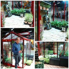 Det chilifärgade växthuset Piccolo rymligare än vad man tror och lätt att odla på höjden. Extremt snygg kontrast med gröna plantor. Vad tycker ni? #wexthuset  #chili #chilli #rött #växthus #greenhouse #gardendreams #odling #mittväxthus #minträdgård #mygarden #inmygarden #nordiskaträdgårdar #älvsjömässan