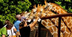 The Lazy 5 Ranch in Mooresville, NC lets visitors talk to, touch and admire domestic and exotic animals from six continents, including giraffe, zebras, buffalo, cattle, sheep, goats, emus, llamas, cows and more.