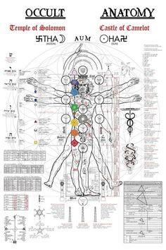 album art The Occult Anatomy of the human body art print on the Vitruvian Man, originally illustrated by Leonardo da Vinci. The Tree of Life (Sephiroth), Kabbalah, Kundalini, Tantra/Yoga Cha