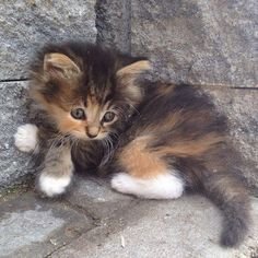 Tiny and gorgeous.