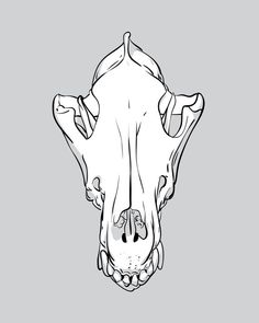 Wolf Skull by appendageaccessories on Etsy, $10.00