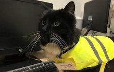 Huddersfield station cat Felix goes global