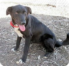 Red Bluff, CA - Border Collie Mix. Meet ARWIN a Dog for Adoption.