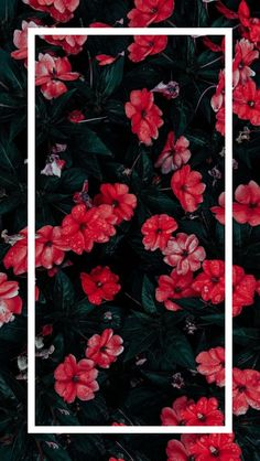 21 Sunset Makeup Looks Tropical sunset flowers Tropical sunset flowers wallpaperpinteres… Tumblr Wallpaper, Cute Wallpaper Backgrounds, Flower Backgrounds, Aesthetic Iphone Wallpaper, Galaxy Wallpaper, Flower Wallpaper, Nature Wallpaper, Cool Wallpaper, Mobile Wallpaper