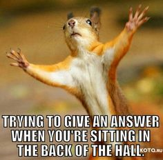 Are you looking for a super adorable squirrel meme? Make somebody's day that much brighter with a funny squirrel meme. Cute Animal Pictures, Funny Pictures, Squirrel Pictures, Jw Jokes, Squirrel Memes, Red Squirrel, Jw News, Hey Brother, Funny Animals
