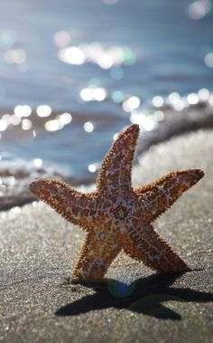 Star @ the beach