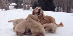 Te vas a derretir al ver jugar a estos cachorritos con su madre en la nieve (VÍDEO)