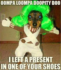 Umpa lumpa dog