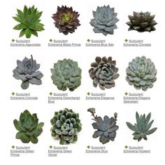 ~ SUCCULENTS ~ A Plant Guide to Some of the Prettiest Succulents Around Read here for my potting & care guide for succulents