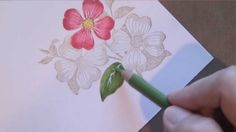 Watch as I show you how to blend with colored pencils on these flowers. Kinda similar to Copics, but a lot less expensive! For more photos and detail, see my...