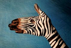 Optical Illusions » Blog Archive » Body Art – Hand Animals