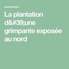 La plantation d'une grimpante exposée au nord
