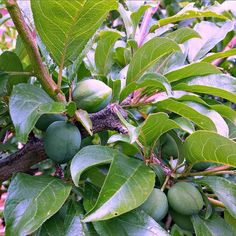 Dry Weather Gardening: November 2014 - Rosehips and Rhubarb