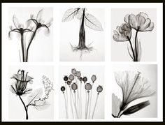 I can never get enough of Steven N. Meyers floral radiography. I buy his calendars almost every year.
