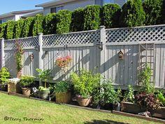 Fence Backyard Ideas iron fence shop swimming pool iron fence shop New England Woodworkers Custom Fence Company For Picket Fences Privacy Fences And Lattice Fencing Gates Arbors Custom Pergolas Pinterest Lattice