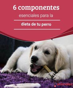 6 componentes esenciales para la dieta de tu perro Muchas veces no sabemos qué componentes principales deben estar presentes en la dieta del perro para mimarlo y cuidarlo como corresponde. #dieta #alimentos #cuidados #alimentación