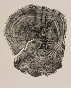Tree Stump Prints by Kalli Walli