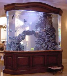 Saltwater Aquarium - Find incredible deals on Saltwater Aquarium and Saltwater Aquarium accessories. Let us show you how to save money on Saltwater Aquarium NOW! Saltwater Aquarium Fish, Tropical Fish Aquarium, Home Aquarium, Aquarium Design, Saltwater Tank, Reef Aquarium, Freshwater Aquarium, Aquarium Ideas, Tanked Aquariums