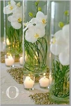 Orchids  bear grass :)