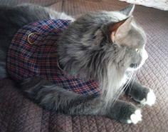 Pet Harness Dark Tartan Size Small by ScotsPlace on Etsy, $18.00
