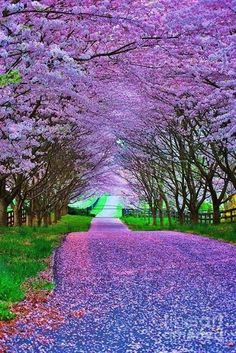 Purple haze... - Explore the World with Travel Nerd Nici, one Country at a Time. http://TravelNerdNici.com