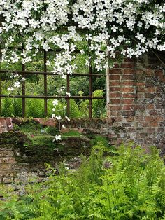 .just white clematis and ferns....