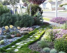 Huntington Beach front yard with Pride of Madeira and Korean grass