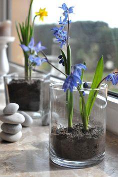 Die schönsten Ideen für deine Fensterdeko #fensterdeko #fensterbank #fensterbankdeko #blumendeko #dekomitblumen #dekoideen #vasen #decorideas #decorwithflowers #flowers #homedecor #windowdecor