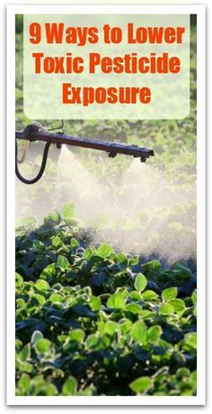 9 Ways to Lower Toxic Pesticide Exposure - Natural Holistic Life