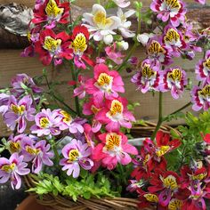 Annual Flowers, Butterfly Flowers, Beautiful Roses, Garden Plants, Seeds, Floral Wreath, Wreaths, Flower Ideas, Angel Wings