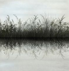 Grass Water Reflection