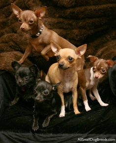 a gagle of doggies  I always thought it should be a giggle of Chihuahuas.