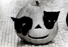 Black halloween kitties