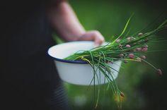 { fresh-picked herbs from my garden } Herb Farm, Herb Garden, Vegetable Garden, Lavender Garden, Country Life, Country Living, Country Women, Edible Garden, Green Life
