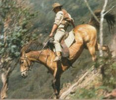 one of my favorite scenes from Man from Snowy River - Tom Burlinson did his own stunts in this movie!