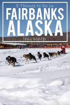 8 Things to Do in Fairbanks Alaska This Winter