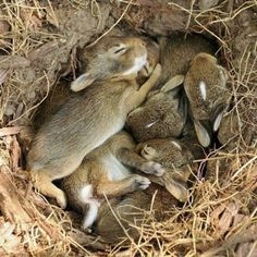 Im Kaninchenbau - Rabbits Cottage - Animals Cute Baby Animals, Animals And Pets, Funny Animals, Animals And Their Babies, Small Animals, Baby Bunnies, Cute Bunny, Bunny Rabbits, Wild Baby Rabbits
