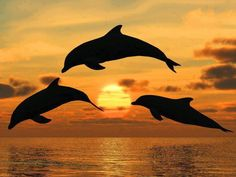 Dolphins jumping at sunset via www.sweetamazingpics.blogspot.in
