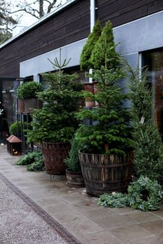 xx..tracy porter..poetic wanderlust.. potted plants -MITT VITA HUS: STOCKHOLM TUR & RETUR
